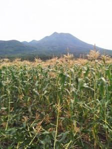岩木山と嶽きみ農園